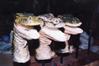 Sculpts (Painted)